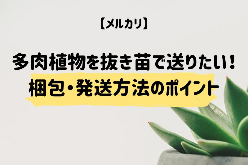 【メルカリ】多肉植物を抜き苗で送りたい!梱包・発送方法のポイント